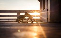 Wilde Makakenaffen, die bei dem Sonnenuntergang kämpfen Lizenzfreie Stockfotos