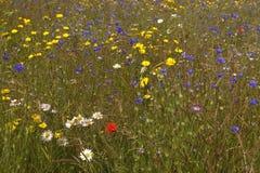 Wilde meadow Stock Images
