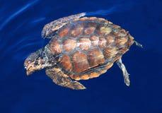 Wilde Meeresschildkröte Stockfotografie