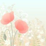 Wilde Mohnblumen Stockbilder