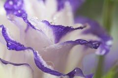 Wilde mooie bloem na regenclose-up Stock Afbeeldingen