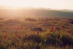 Wilde Natur-Anemonen Lizenzfreies Stockbild