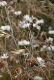 Wilde netelige installaties en bloemen Royalty-vrije Stock Fotografie
