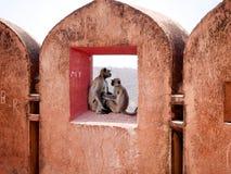 Wilde? No amor no forte de Jaigarh foto de stock royalty free