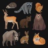 Wilde Nordwaldtiere stellten, Igeles, Waschbär, Eichhörnchen, Rotwild, Fuchs, Bärenjunges, wilder Eber, Hasevektor Illustrationen stock abbildung