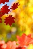 Wilde oktober kleuren royalty-vrije stock foto