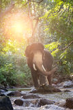 Wilde olifant in de rivier royalty-vrije stock foto