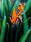 Wilde oranje bloem stock foto's