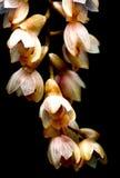 Wilde orchideeën Royalty-vrije Stock Foto