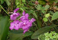 Wilde orchidee stock foto's