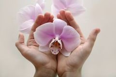 Wilde orchidee Royalty-vrije Stock Afbeeldingen