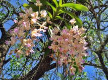 Wilde orchidee royalty-vrije stock fotografie