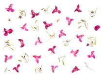 Wilde Orchidee Stockbilder