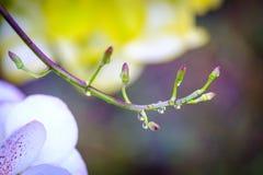 Wilde orchidee in regenwoud, schoonheid van de aard stock afbeeldingen