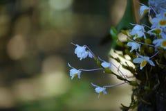 Wilde Orchidee selten und herrlich lizenzfreies stockfoto