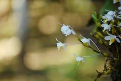 Wilde Orchidee selten und herrlich stockfoto