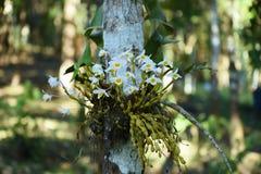 Wilde Orchidee selten und herrlich lizenzfreies stockbild