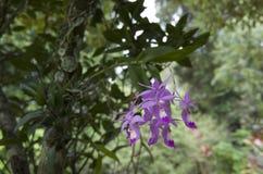 Wilde orchideebloem Stock Afbeeldingen