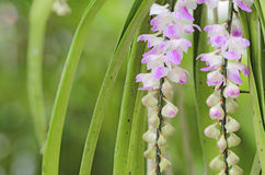 Wilde Orchideeblume Stockfotos
