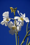 Wilde Orchideen. Borneo. Lizenzfreies Stockfoto