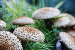 Wilde paddestoelen die in bos groeien Stock Afbeelding