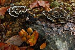 Wilde paddestoelen op bosgebied stock afbeelding
