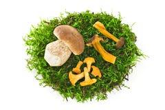 Wilde paddestoelen op groen mos stock afbeeldingen