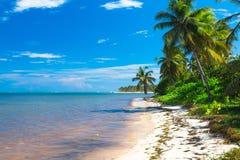 Wilde Palmen auf dem Atlantik stützen unter, dominikanisch stockfotos