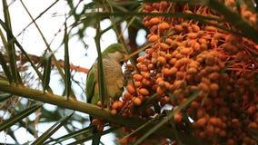 Wilde papegaai op een boom stock footage