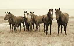 Wilde Pferde auf dem Strand Stockfoto