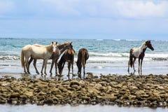 Wilde Pferde auf dem Strand Stockbild