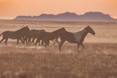 Wilde Pferde bei Sonnenuntergang stockfotografie