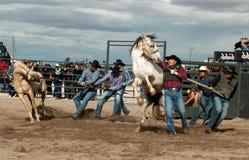 Wilde Pferde am Berufsrodeo Lizenzfreie Stockbilder