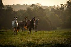 Wilde Pferde in den Bergen bei Sonnenaufgang 2 Lizenzfreie Stockbilder