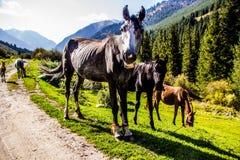 Wilde Pferde in der Natur Lizenzfreies Stockfoto