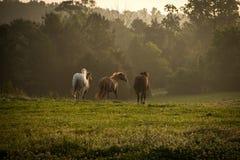 Wilde Pferde, die in die Berge bei Sonnenaufgang laufen Lizenzfreies Stockbild