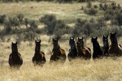 Wilde Pferde, die im hohen Gras stehen Lizenzfreie Stockfotos