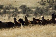 Wilde Pferde, die im hohen Gras stehen Stockfotos
