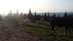 Wilde Pferde durch den Wald stockfotos