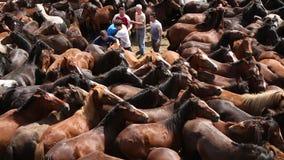 Wilde Pferde rundeten oben in der gedrängten Arena während des Rapa DAS Bestas stock video footage