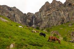 Wilde Pferde und Wasserfall Lizenzfreies Stockbild