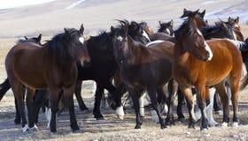 Wilde Pferde von Wyoming Stockfotos