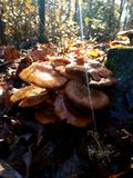 Wilde Pilze stockbild