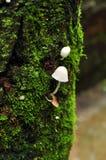 Wilde Pilze Lizenzfreie Stockbilder