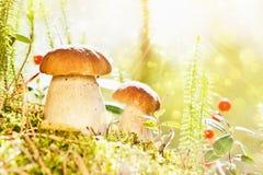 Wilde Pilze Stockfotografie