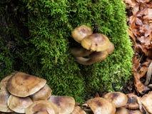Wilde Pilze Lizenzfreie Stockfotografie