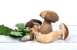 Wilde Pilze auf weißem Hintergrund Stockbild