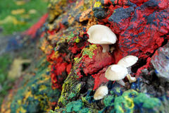 Wilde Pilze keimten auf dem gemalten Baumstumpf Stockbilder