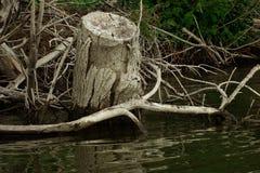 Wilde plaatsen op eilanden 2 van Donau royalty-vrije stock afbeelding