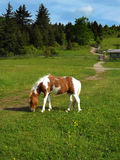 "Wilde Poney †""Grayson Highlands State Park Stock Foto's"